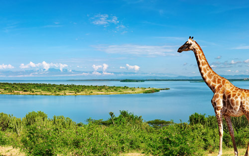 تنوع زیستی دریاچه ویکتوریا
