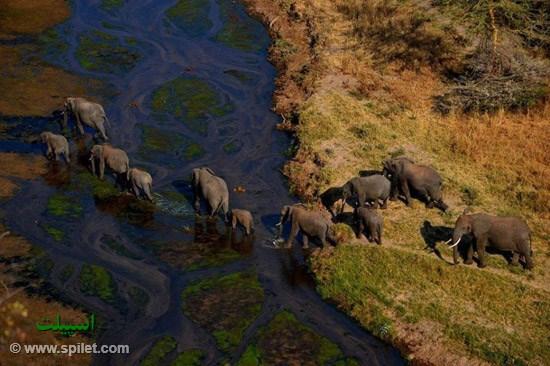 حیات وحش کنیا تانزانیا