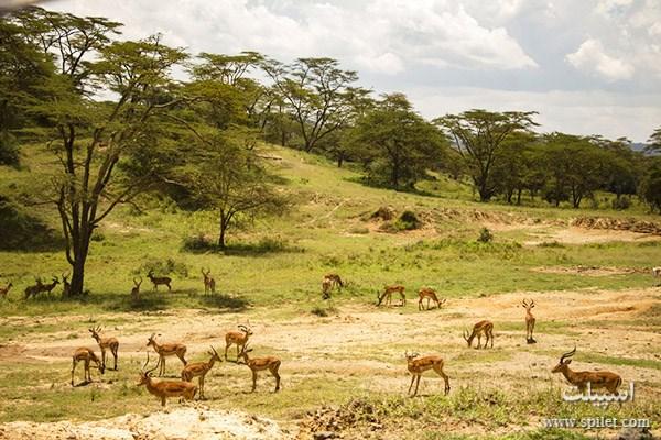 سفر به آفریقا