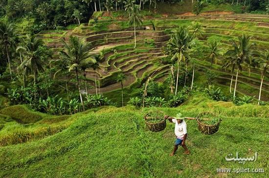 مزارع جزیره ماداگاسکار