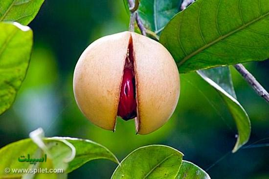 میوه در زنگبار