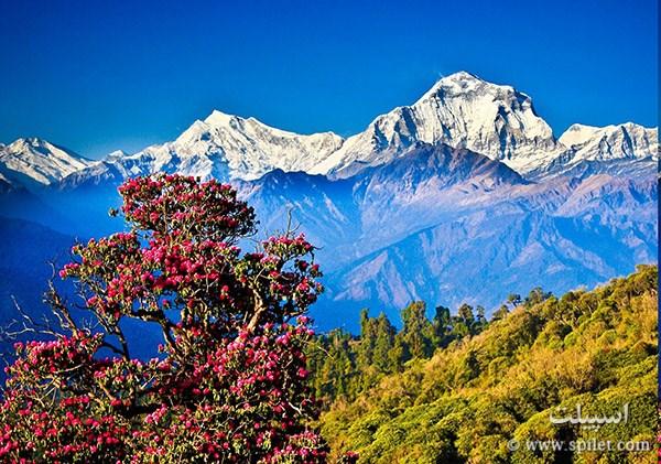 رشته کوئه هیمالیا در کشور نپال