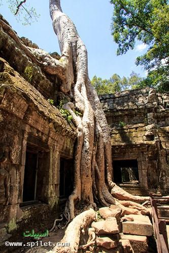 معبد تاپروهم