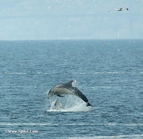 تور قشم- دلفین ها