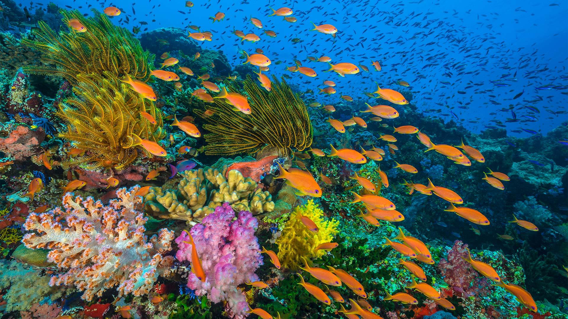 صخرههای مرجانی