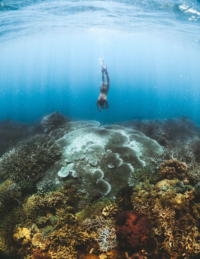 باغ مرجان های کرون