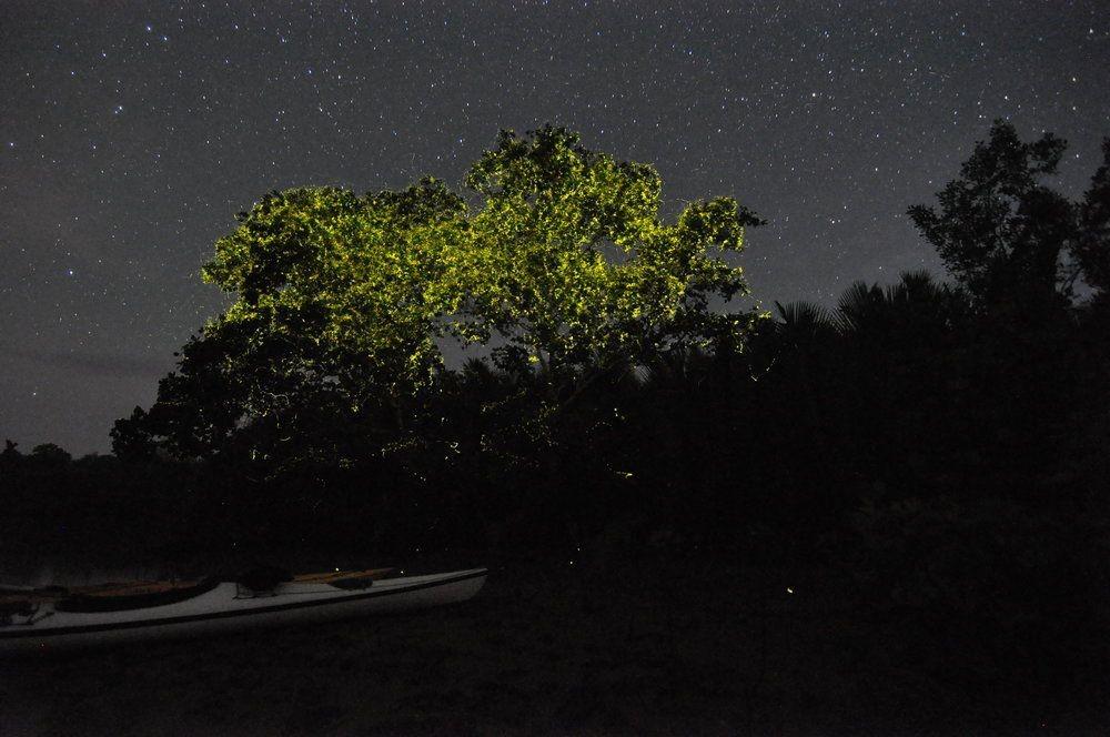 جزیره سیارگائو